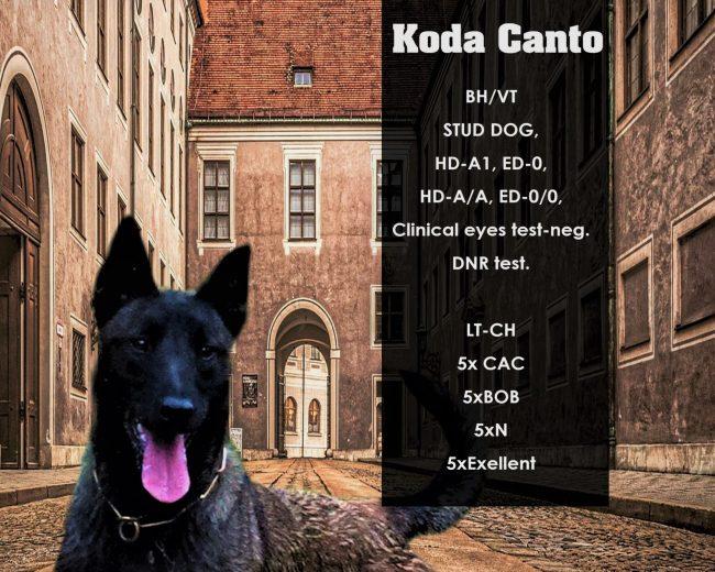 Koda Canto